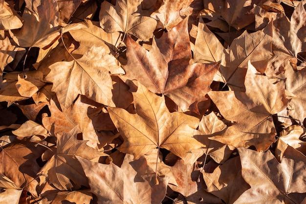 Sfondo di un mucchio di foglie cadute sul pavimento durante l'autunno in una giornata di sole