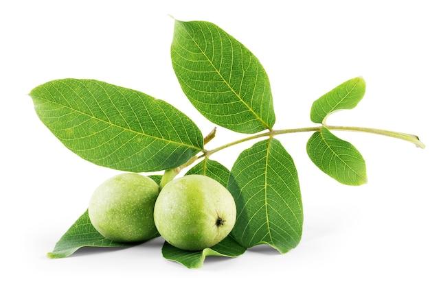Noci frutti ramo di albero verde isolato su uno sfondo bianco