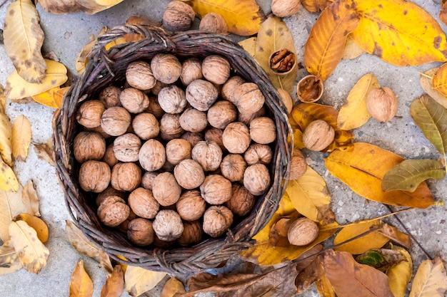 Noci in un cestino di vimini su una delle foglie gialle cadute