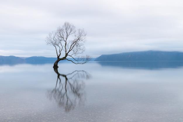 The wanaka tree, il salice più famoso nel lago wanaka in nuova zelanda