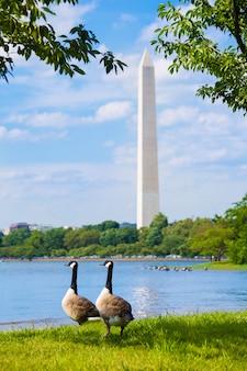Washington monument e tidal basin ducks dc