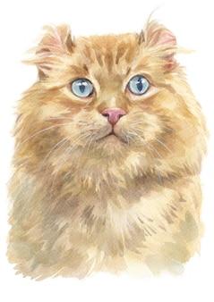 Acquarello di american curl cat