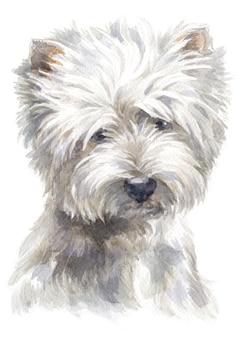 Acquarello di west highland white terrier