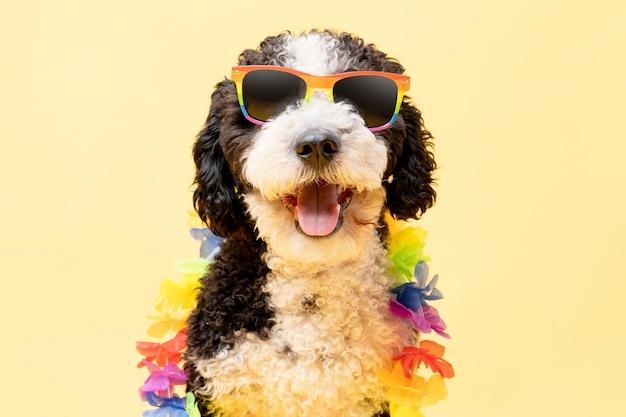 Cane d'acqua che indossa occhiali da sole con arcobaleno e una catena di fiori su uno sfondo giallo lgtb