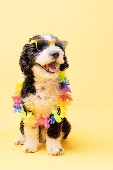 Cane d'acqua che indossa occhiali da sole con bandiera arcobaleno e una catena di fiori su uno sfondo giallo lgtb