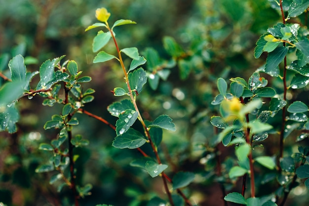 Goccia d'acqua su foglia verde