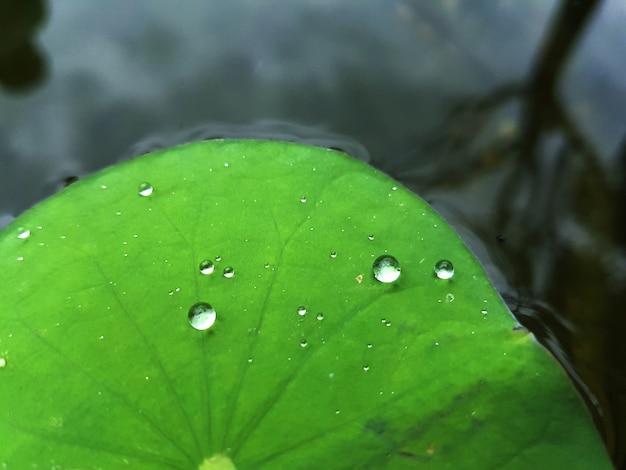 Goccia d'acqua sulla foglia di loto