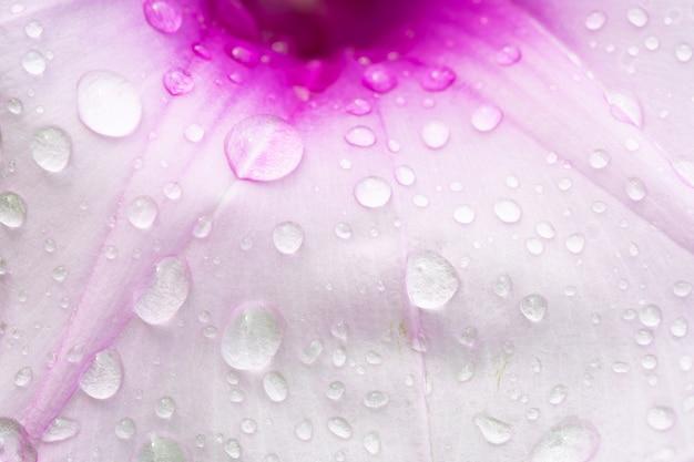 Gocce d'acqua su fiori rosa