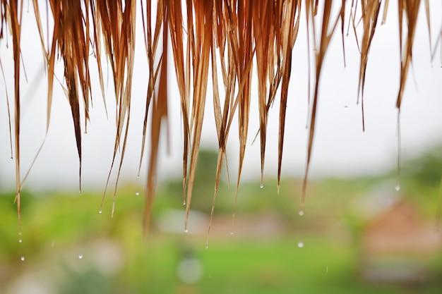 Gocce d'acqua sul tetto di paglia. tetto fatto delle foglie secche dell'erba di cogon nei countrys