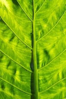 Acqua in congedo sfondo, foglia verde natura