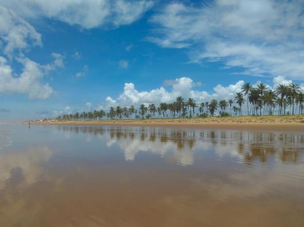 Specchio d'acqua sulla spiaggia di barra do coqueiros ad aracaju sergipe