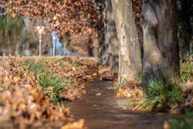 Acqua che scorre in un condotto di irrigazione, in autunno.