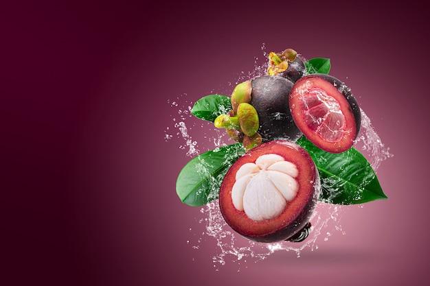 Innaffi la spruzzatura sui mangostani regina dei frutti su fondo rosso