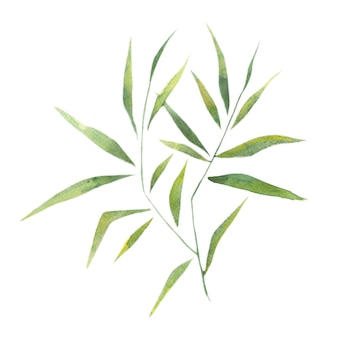 Il bambù dell'acquerello lascia i rami di bambù un singolo elemento su un fondo bianco