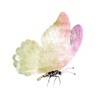 Farfalle dell'acquerello isolate