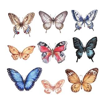 Farfalle dell'acquerello set di illustrazione disegnata a mano di farfalle