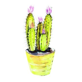 Cactus dell'acquerello isolato su priorità bassa bianca. è perfetto per carte, poster, striscioni, inviti, biglietti di auguri, stampe.