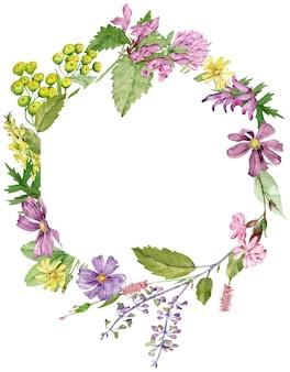 Struttura del cerchio dell'acquerello con erbe e fiori di campo isolati su sfondo bianco con spazio di copia