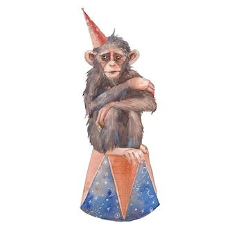 Personaggio da circo ad acquerello: scimmia addestrata con cappello da festa. arte in stile vintage.