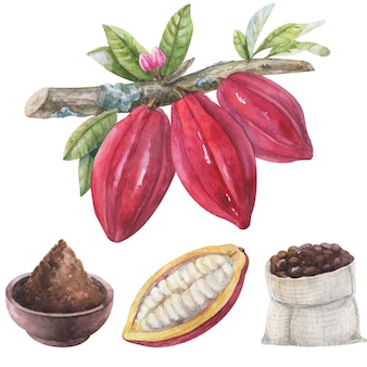 Fave di cacao dell'acquerello su un ramo con fiori e foglie