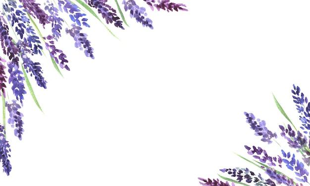 Cornice dell'acquerello con fiori di lavanda sfondo cornice fiori di lavanda lilla