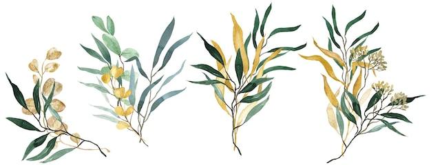 Mazzi di eucalipto verde e oro dell'acquerello. verde primaverile. illustrazione floreale di nozze.