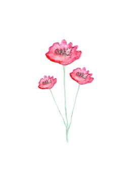 Illustrazione dipinta a mano dell'acquerello del fiore del papavero