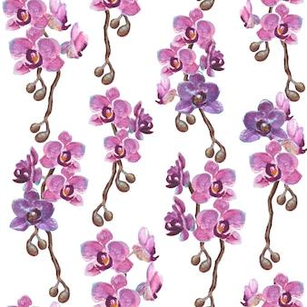 L'orchidea dipinta a mano dell'acquerello si ramifica il modello senza cuciture su superficie bianca