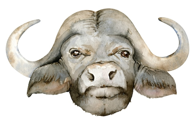 Illustrazione dell'acquerello della testa di bufalo africano nero.