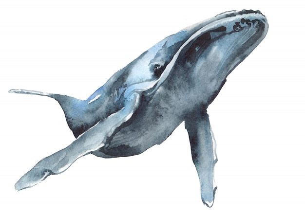 Illustrazione dell'acquerello di una balena blu