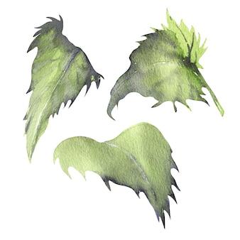 Illustrazione dell'acquerello di mariannick asherah foglie