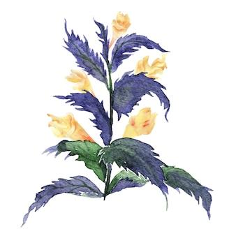 Illustrazione dell'acquerello della pianta di mariannick asherah con i fiori