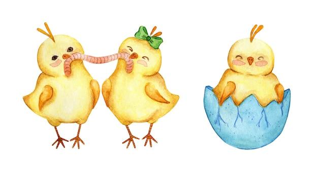 Insieme dell'illustrazione dell'acquerello di piccoli polli gialli svegli. i polli mangiano un verme, un pulcino nato da un uovo. pasqua, religione, tradizione. isolato su sfondo bianco. disegnato a mano.