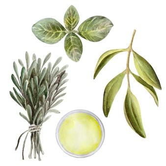 Illustrazione dell'acquerello set con foglie, frutta e olio d'oliva. olio ed erbe aromatiche