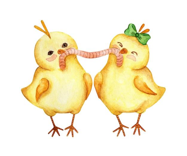 Illustrazione dell'acquerello di due piccoli polli gialli che mangiano insieme un verme. coppia di pulcini ragazzo e ragazza. pasqua, religione, tradizione. isolato su sfondo bianco. disegnato a mano.