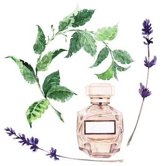 Illustrazione dell'acquerello con varie fiale e piante aromatiche
