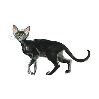 Gatto orientale dell'acquerello animali domestici neri disegnati a mano dei peli di scarsità su fondo bianco.