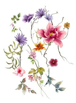 Pittura ad acquerello di foglie e fiori, su sfondo bianco