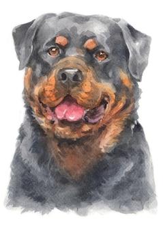 La pittura ad acquerello del cane rottweiler