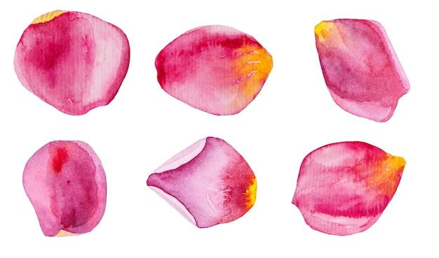 Set di illustrazioni di petali di rosa rosa dell'acquerello