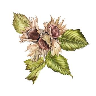 Illustrazione realistica dell'acquerello di nocciole. insieme degli elementi delle nocciole dell'acquerello, dipinto a mano isolato