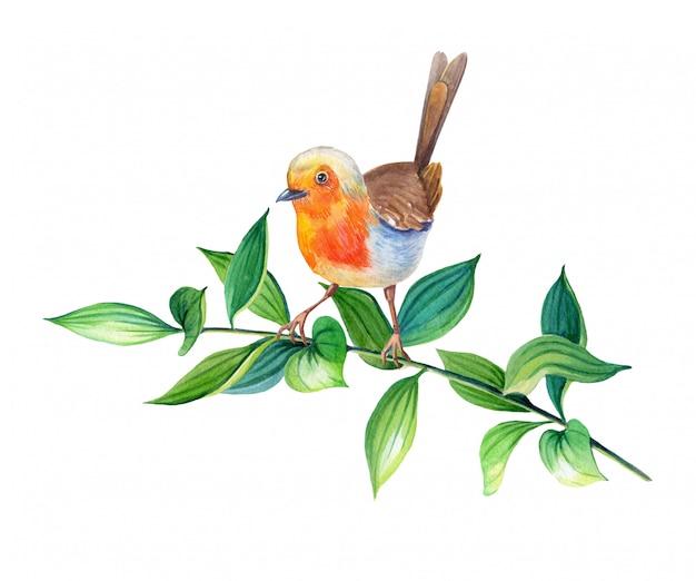Acquerello robin bird erithacus rubecula in stile realistico su sfondo bianco.