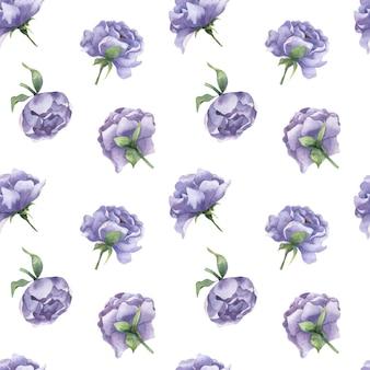 Reticolo senza giunte dell'acquerello con boccioli di peonia fiori di peonia lilla con foglie su sfondo bianco