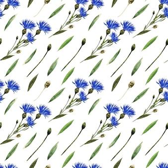 Reticolo senza giunte dell'acquerello con ramoscelli, foglie, boccioli e fiori della pianta fiordaliso
