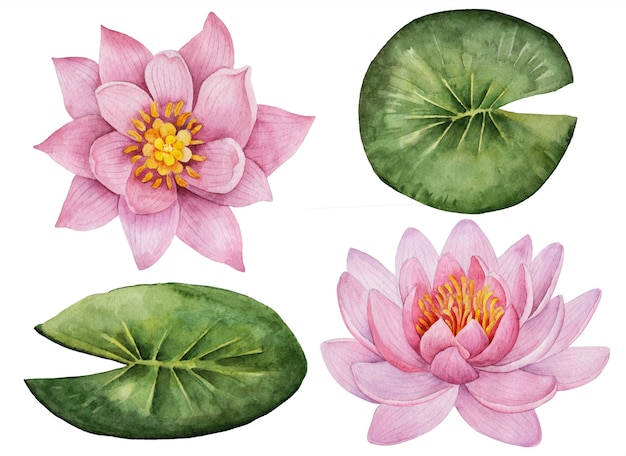Insieme dell'acquerello di fiori, illustrazione disegnata a mano di ninfee, elementi floreali luminosi isolati su un bianco