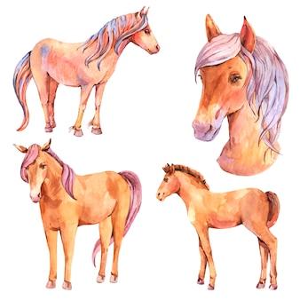 Insieme dell'acquerello di cavalli rossi