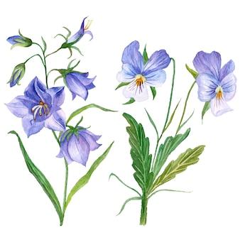 Insieme dell'acquerello con viole del pensiero e fiori di campanula, illustrazione disegnata a mano con oggetti floreali isolati su bianco