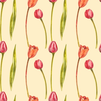 Reticolo senza giunte dei tulipani dell'acquerello. insieme del fiore selvaggio isolato su bianco. illustrazione botanica dell'acquerello, mazzo dei tulipani arancio, fiori rustici.
