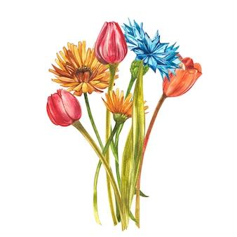 Tulipani acquerelli. insieme del fiore selvaggio isolato su bianco. illustrazione botanica dell'acquerello, mazzo dei tulipani arancio, fiori rustici.