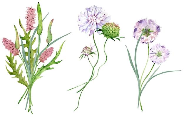 Mazzi di fiori di campo dell'acquerello isolati su sfondo bianco